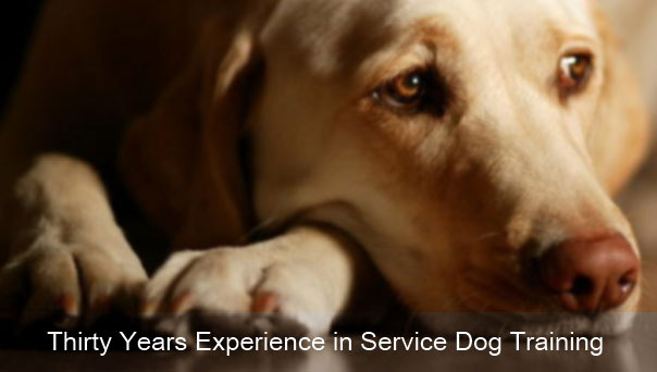 Thirty Years Experience in Service Dog Training